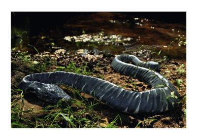 Serpiente bifurbida 2011 Arcilla mixta autococcion policormada 10x70x100(250)cm