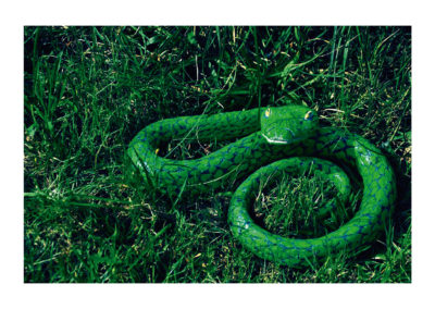 Crotalo verde 2011 Arcilla mixta autoccion policromada 12x42x52(200)cm